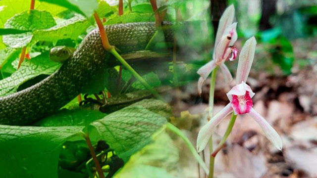 Endangered Wildlife Observed on Mt. Gaya