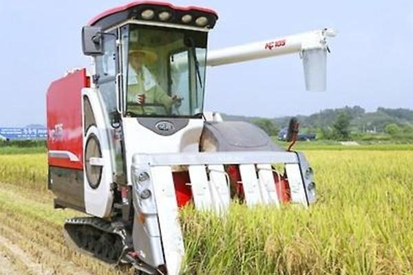 Правительство РК закупит 350 тыс. тонн риса в госрезерв