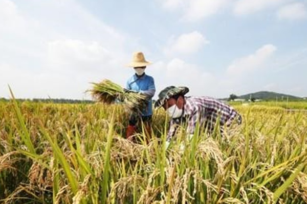 Рис из госрезервов будет пущен в продажу