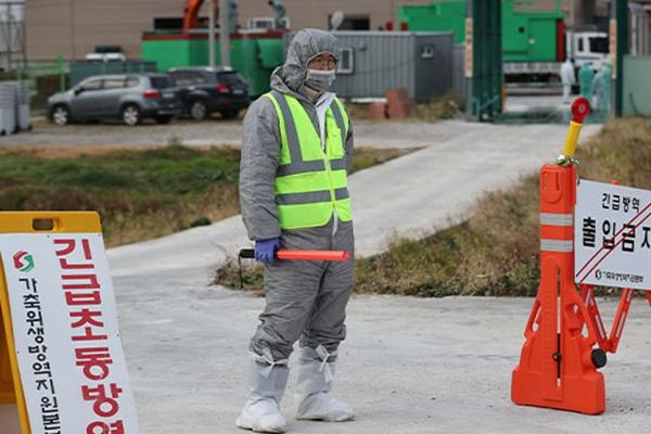 韩家禽养殖场出现高致病性禽流感疫情 政府全力开展防疫工作