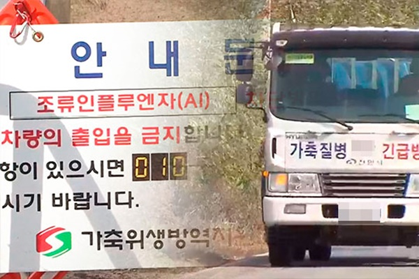 Thêm một trang trại gà Hàn Quốc bị nhiễm cúm gia cầm độc lực cao