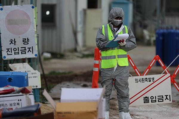 Highly Pathogenic Bird Flu Cases Found in North Jeolla, Gyeonggi Provinces