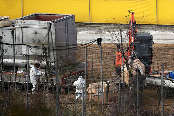 Regierung will weniger Geflügel wegen Vogelgrippe keulen