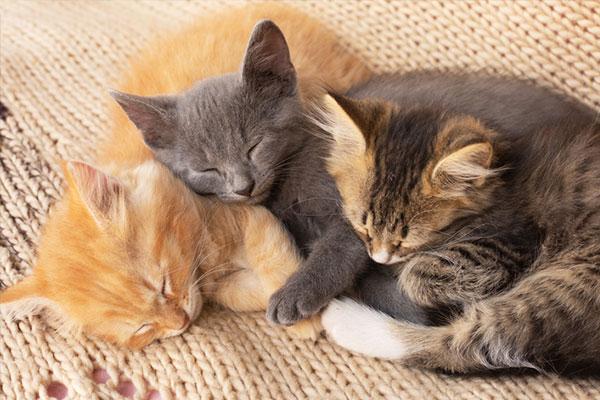 韩宠物猫确诊感染新冠 伴侣动物也须进行2周隔离