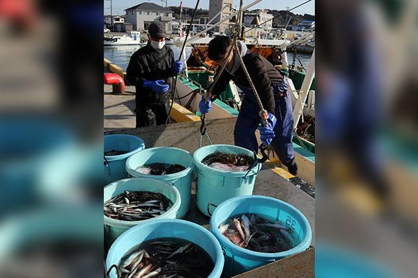 В рыбе в районе АЭС Фукусима - высокий уровень содержания цезия