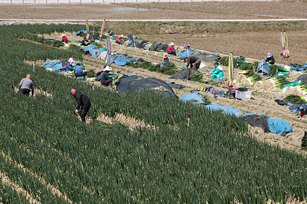 Цены южнокорейских производителей растут семь месяцев подряд