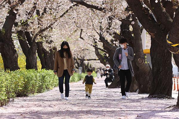 観測史上最も暖かかった3月 桜も99年間で最も早く開花