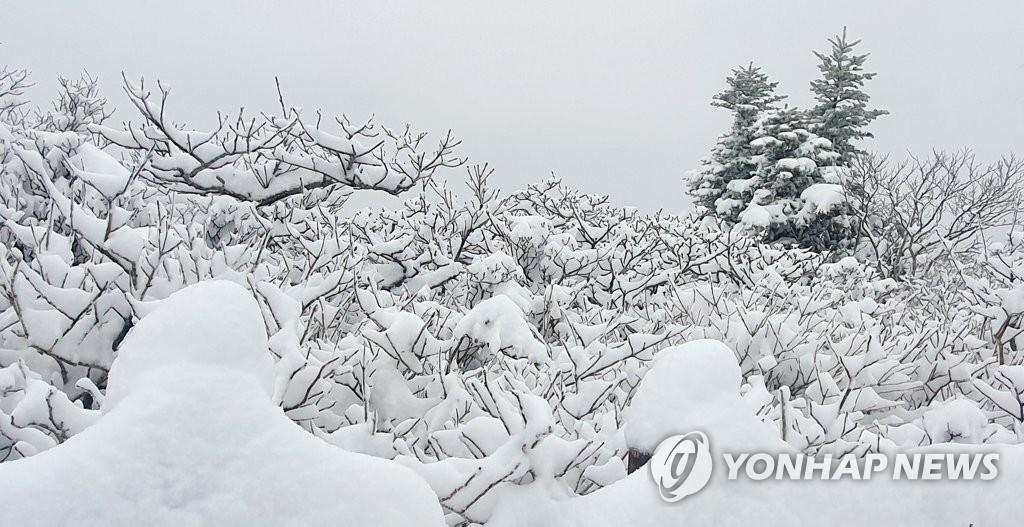 В горных районах провинции Канвондо выпал снег
