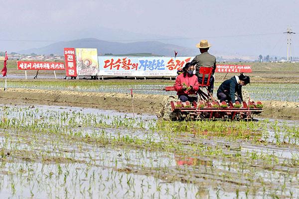 Власти КНДР поддержат крестьян в сезон посадки риса