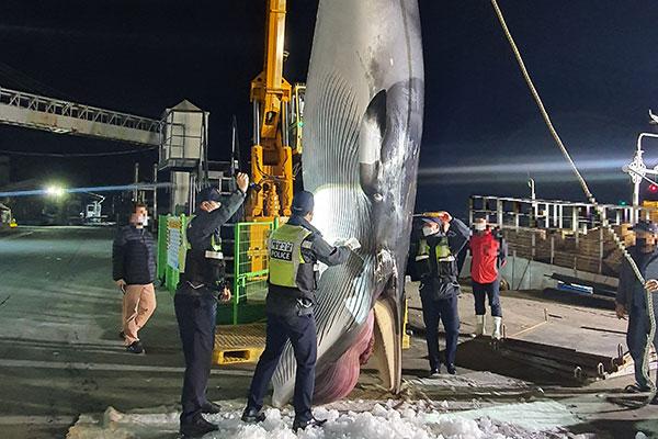 海洋水産部 海岸に座礁・漂着した鯨肉の委託販売を禁止へ