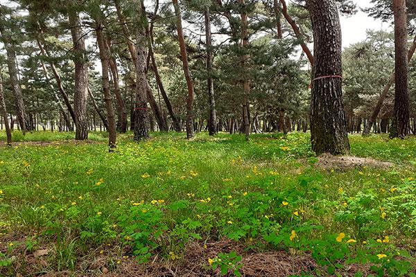 Mở cửa 11 con đường rừng trong quần thể lăng tẩm triều đại Joseon mùa hè