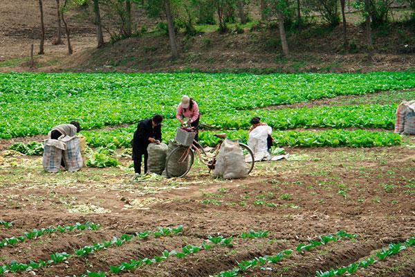 Продовольственная ситуация в Северной Корее лучше, чем кажется