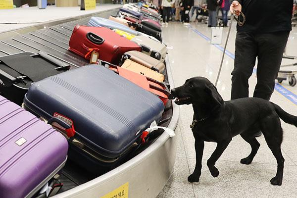 Khai trương Trung tâm huấn luyện chó nghiệp vụ tại Hàn Quốc