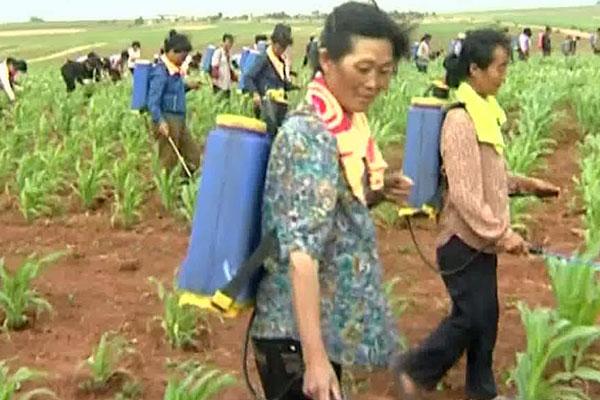 Corea del Norte llama a mejorar la productividad agrícola