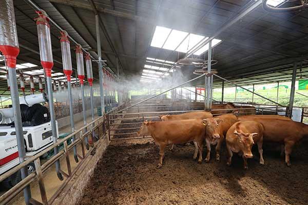 Calor extremo afecta a granjas avícolas y porcinas