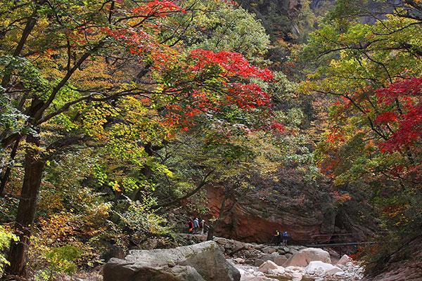 Lá phong đổi màu sớm nhất trên núi Seorak từ ngày 28/9