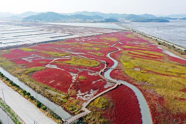 Seúl intenta inscribir 9 humedales más como Patrimonio Natural