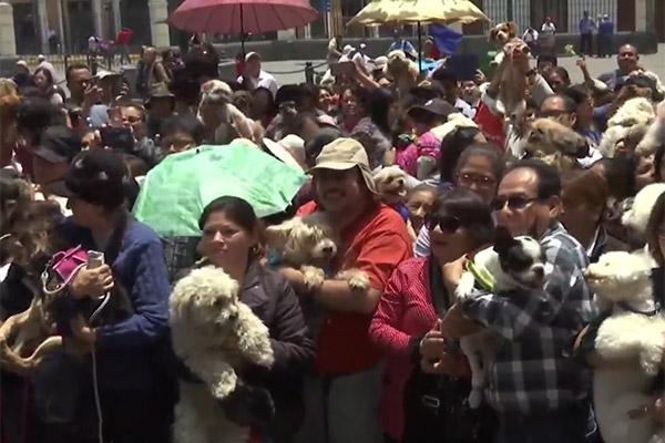 Philippiner lassen Haustiere segnen