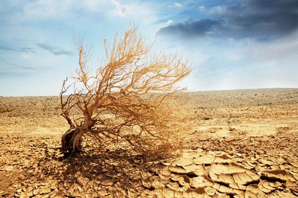 En Mongolie, 78 % du territoire se désertifie