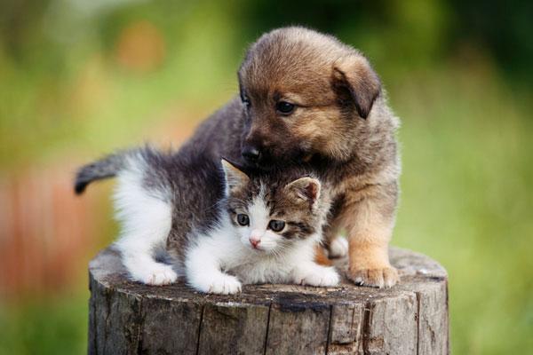 Au Japon, les chiens et les chats ont désormais pour obligation d'être pucés.