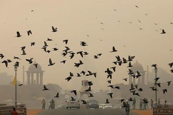 Indiens Hauptstadt versinkt im Smog