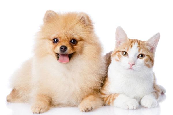 Shenzhen est devenue la première ville à bannir la viande de chat et de chien