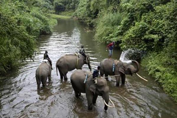 Zwei Indonesier wegen Jagd auf Sumatra-Elefanten verhaftet