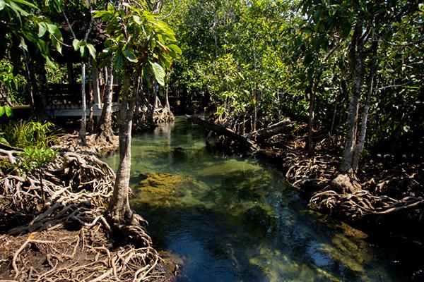 BTS : les fans indonésiens plantent 8 000 mangroves pour l'anniversaire de Jimin