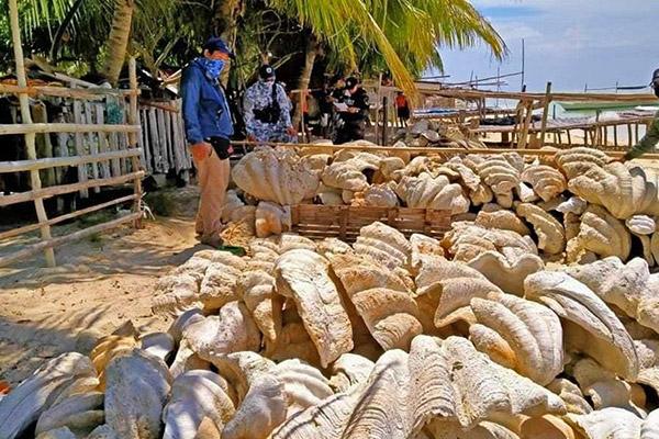 Philippinen: Küstenwache beschlagnahmt 150t Riesenmuscheln