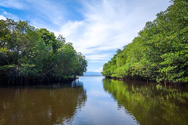 L'Indonésie accélère la restauration de ses mangroves