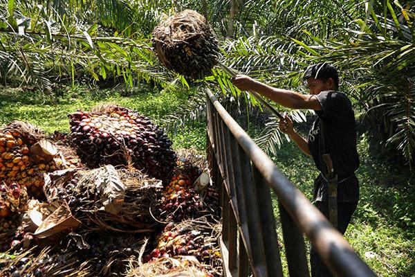 L'Indonésie projette d'arrêter les exportations d'huile de palme