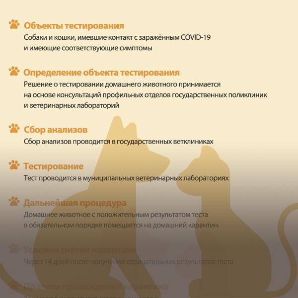 Руководство по тестированию на наличие COVID-19 и помещению в карантин домашних животных