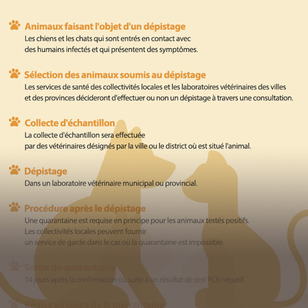 COVID-19 : instructions pour le dépistage et la quarantaine des animaux de compagnie