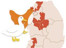 Propagation de la grippe aviaire  H5N6