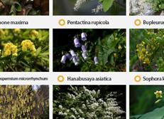 La lista roja de la UICN incluye 33 plantas autóctonas de Corea
