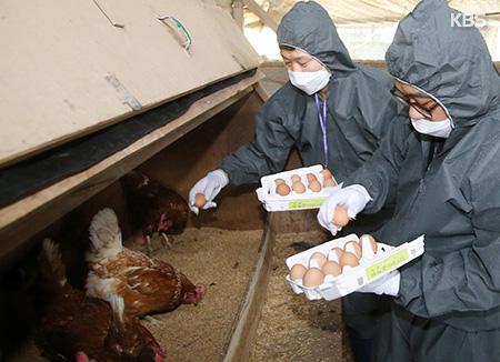 살충제 계란 파문