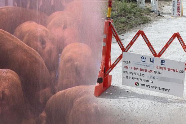La Corée du Sud prend des mesures contre la peste porcine africaine