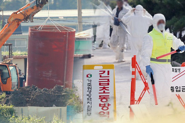 South Korea culls all pigs in Paju and Gimpo amid continued reports of African Swine Fever