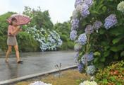 موسم الأمطار الصيفية يبدأ في جيجو