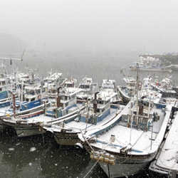 Snow Covered Boats
