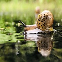 L'escargot et la pluie de printemps