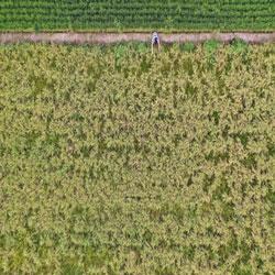 الحقول الناضجة بين الخريف والصيف