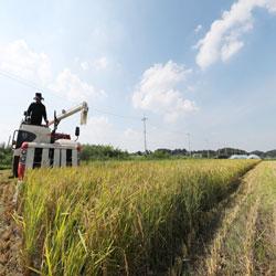 حصاد الريف