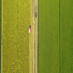حصاد المناطق الريفية المزدحمة