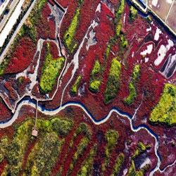 Autumn Colors on Wetland