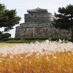 العشب الفضي يزهر  في القلعة