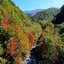تساقط  أوراق الشجر  فوق قمم جبل هالا
