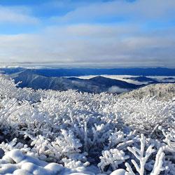 Paysage de branches gelées à Seorak