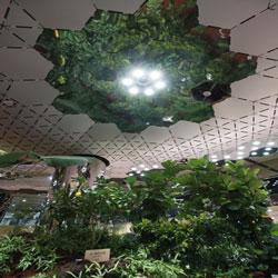 Vườn cây năng lượng mặt trời