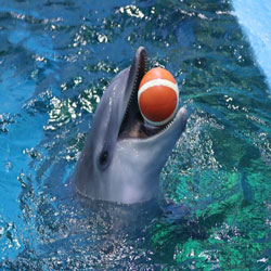 Dolphin Unveiled